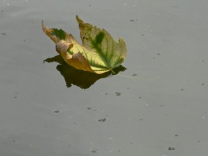 Leaf on Globe Pond