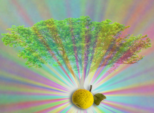 apple and tree photo illustration